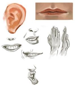 Anebarone - estudos de anatomia em pintura digital de partes do rosto e mãos